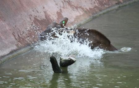 2 splash down