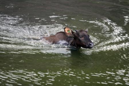 3b swimming 2