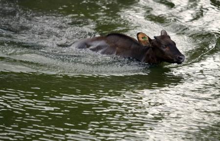 3b swimming